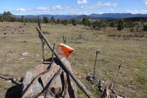 COVID-19: The Next Steps for Orienteering