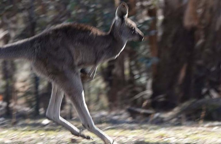 German Family Enjoys Close Encounter with Kangaroos