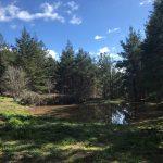 Entries Open for East Stromlo MTBO